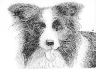 pet portrait example:  carbon pencil on 200gsm paper